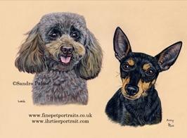 Zwergpudel & Manchester Terrier