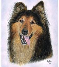 Collie-Schäferhund