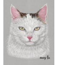Katze Nonny