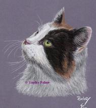 Katze Betsy