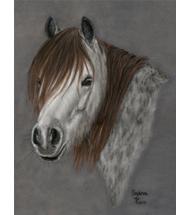 Pferdeportrait Galerie Pastell
