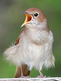 Vogelfotos