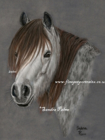Pferde Pastell