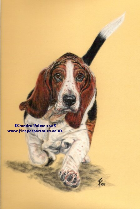 Basset Hundeportrait Pastell