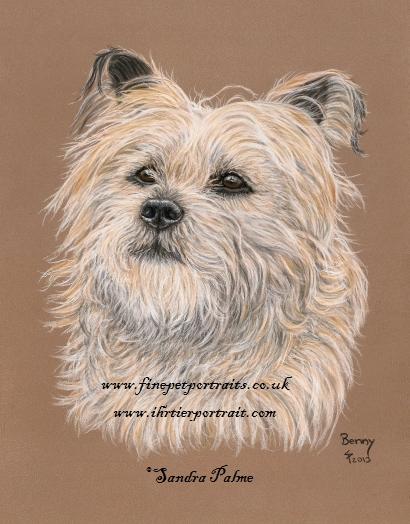 Cairn Terrier Tierportrait