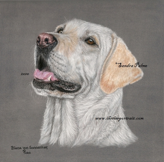 Labrador Portrait Hundeportrait in Pastell