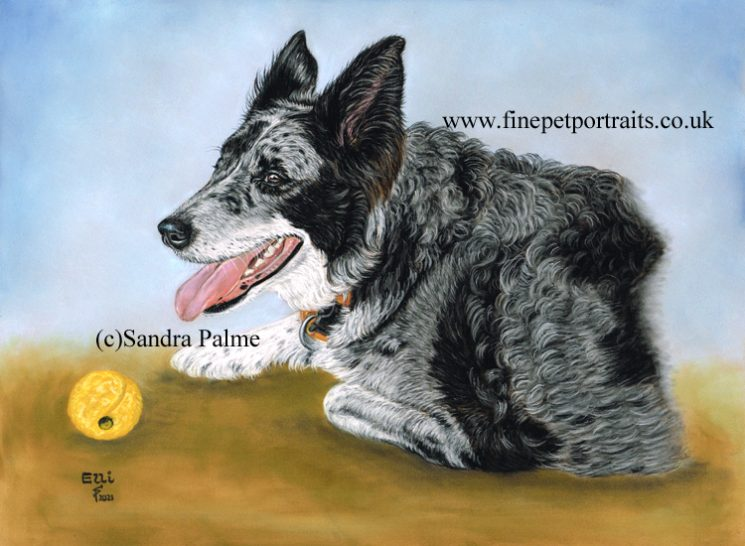Hundeportrait Elli