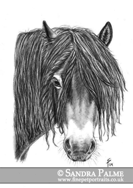 Exmoorpony Hengst Pferde-Portrait