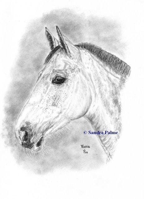 Westfalen Stute Pferdeportrait