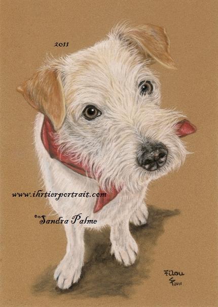 Kromfohrländer Hund Portrait