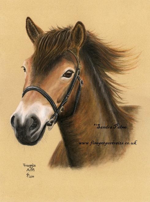 Exmoor Pony Pferdeportrait