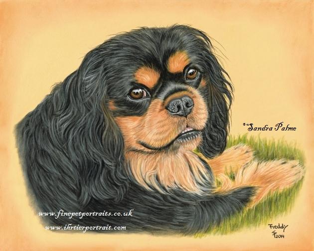 Cavalier King Charles Spaniel Hund Portrait