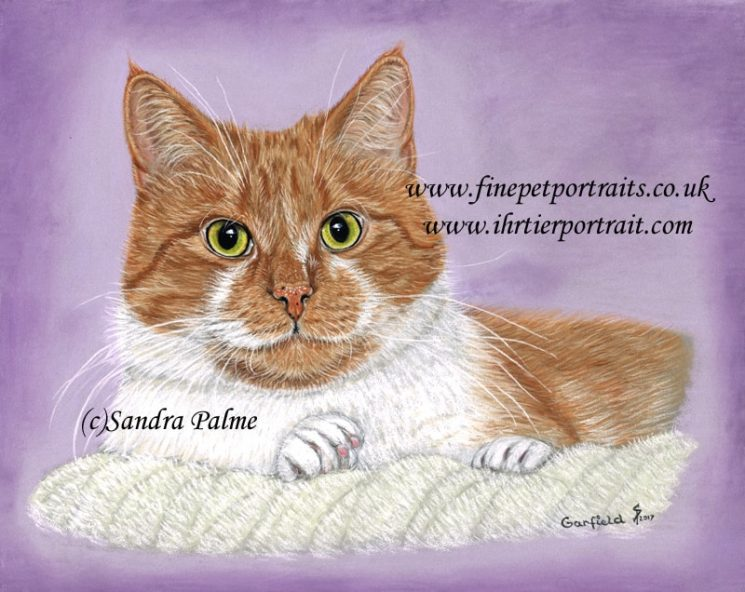 Garfield Katzen Portrait