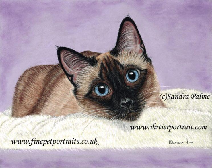 Kimba Katzen Portrait