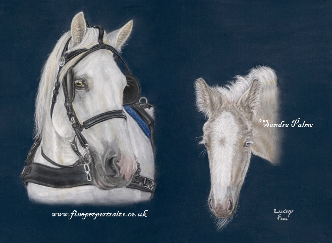 American Cream Draft Horse Pferde Portrait