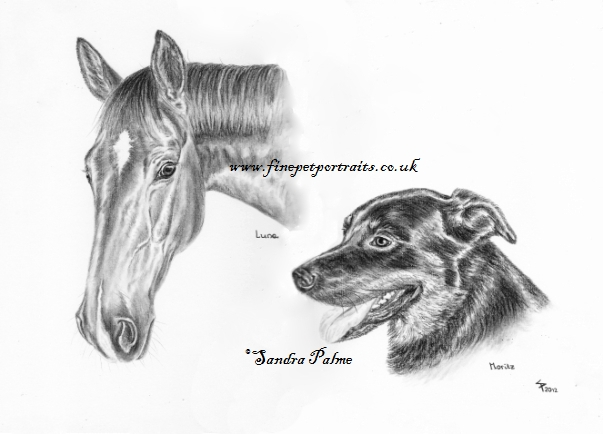 Pferd Hund Kohle Zeichnung