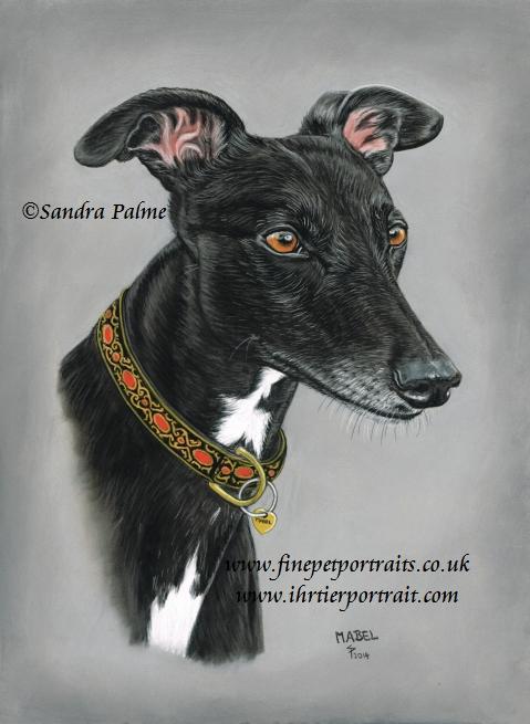 Greyhound Hundeportrait