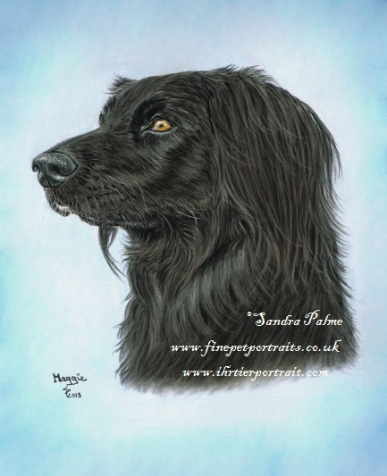 Hundeportrait Flat-coated Retriever