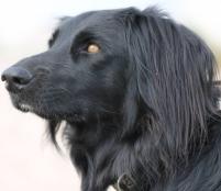 Hund Maggie Vorlagefoto
