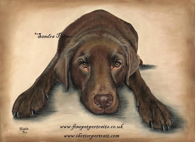 Schokoladenfarbener Labrador Portrait