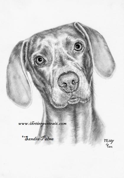 Weimaraner Hunde-Zeichnung in Kohle
