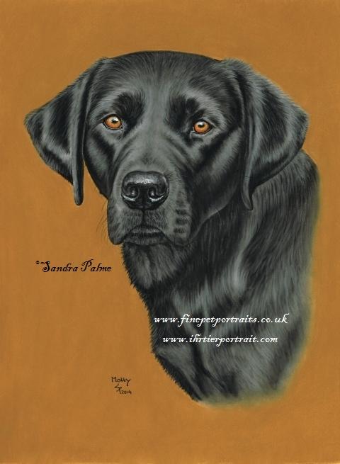 Schwarzer Labrador Hunde Portrait