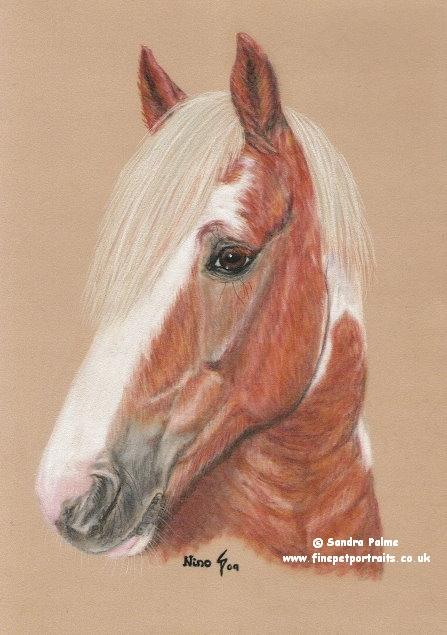 Scheckwallach Pferde-Portrait