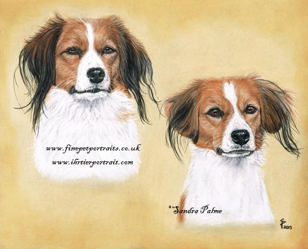 Kooiker Hunde Portrait