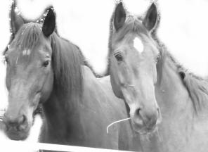 Pferdevorlage
