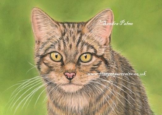 Schottische Wildkatze