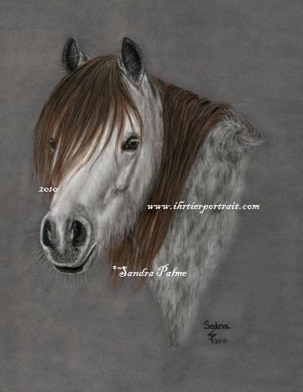 Welshpony Portrait