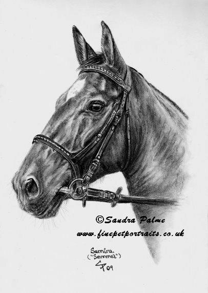 Pferde Zeichnung in Kohle