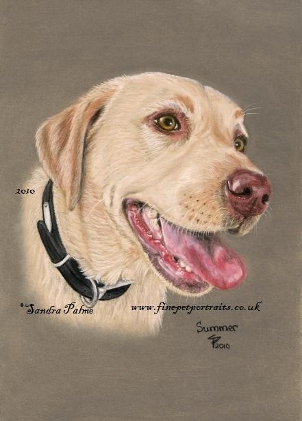 Labrador Retriever Portrait
