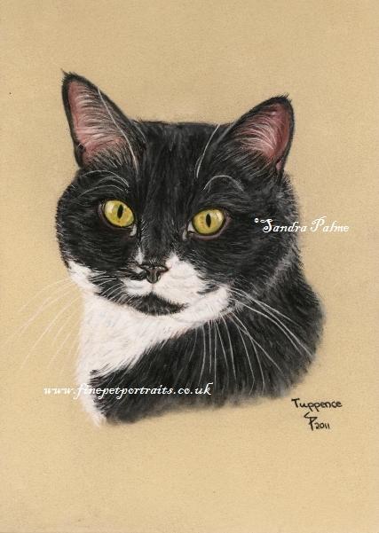 Katzenportrait Pastell