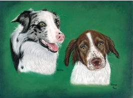 Border Collie & Springer Spaniel