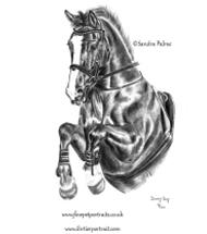 Irisches Sportpferd