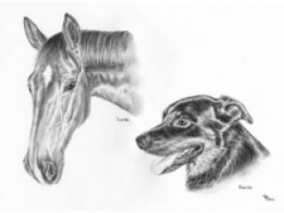 Pferd und Hund
