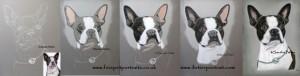 Entwicklungsscans Hundeportrait