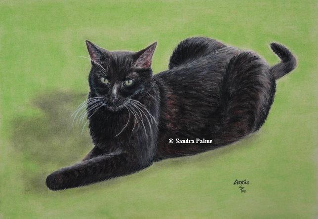 Schwarze Katze Portrait
