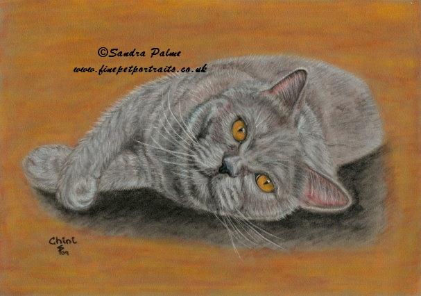 Britisch Kurzhaar Katze Portrait