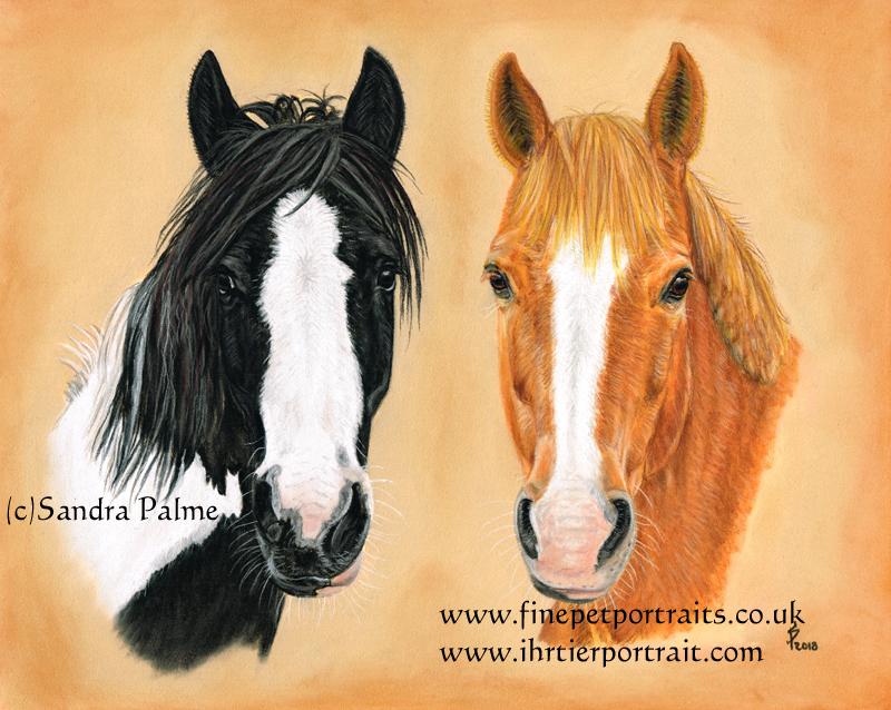 Pferde Kopfstudie Pastell