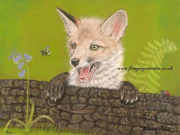 Fuchswelpe Fuchs Portrait