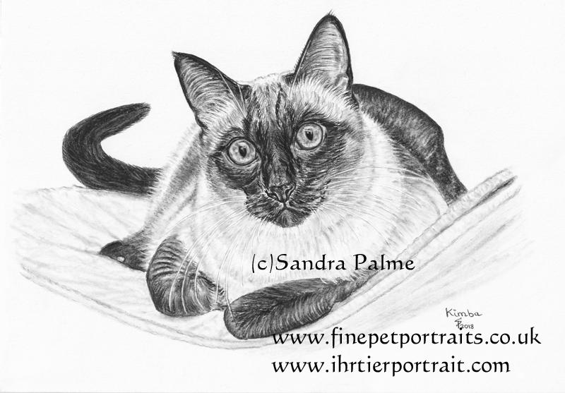 Thai Katze Kohle-Zeichnung