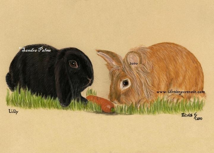 Kaninchen Tierportrait