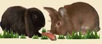 Kaninchen Foto