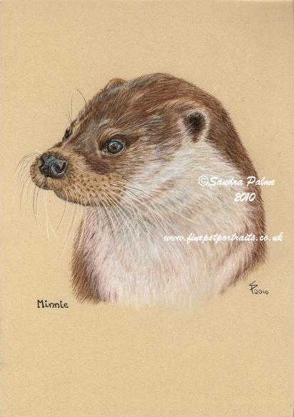 Otter Tierportrait