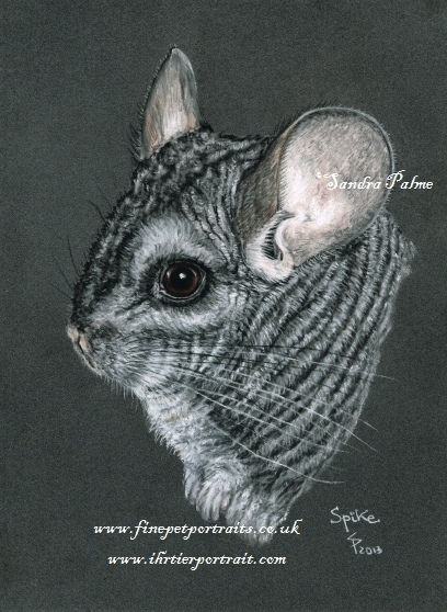 Chinchilla Tier Portrait