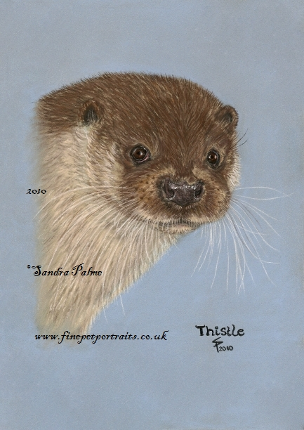Otter Zeichnung