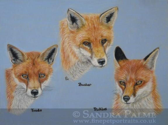 Fuchs Rotfuchs Portrait