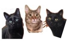 Katzen Vorlagefoto